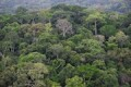 Photo : site EuropeAid - Foret du Gola (Sierra Leone)