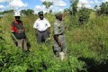 Mozambique Personnes Agriculture Champs